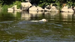 kesi u vody- Léto 2013