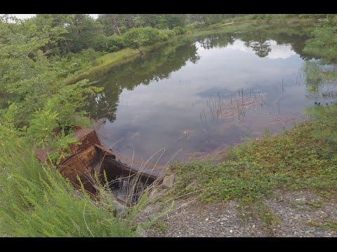 Exploring a Secret Hidden Pond in Wall Township New Jersey
