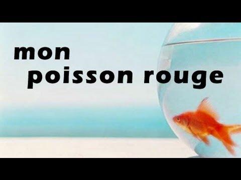 Mon poisson rouge ayant appris...