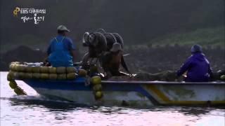 EBS 다큐프라임 - Docuprime_백성의 물고기 1부 멸치, 바다의 손자병법_#001