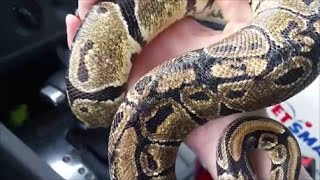 these-snakes-were-abandoned-the-most-burn-scars-ive-ever-seen