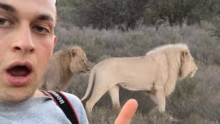 I WENT ON A SAFARI IN AFRICA AND STOOD FEET AWAY FROM A CHEETAH | Chris Klemens