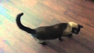 Коты - это гангстеры животного мира  ^.^