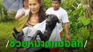 """กู้ภัยระยองช่วยสุนัขตกบ่อ """"เจ้ามืด"""" หายไป 3 วันหวิดตายคาบ่อลึก 10 เมตร   Thairath Online"""