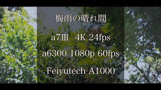梅雨の晴れ間[a7Ⅲ][4K][gimbal][japan]
