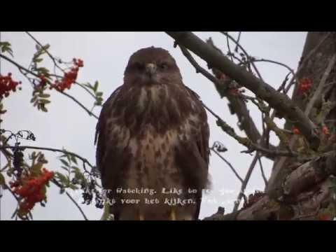 Een kennismaking met onze natuur video's - An introduction to our nature videos.