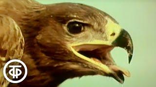 В мире животных. Юрий Климов - о том, как снимаются фильмы о животных (1990)