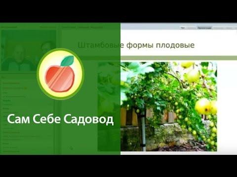 Фотошоп онлайн - Обрезать фотографию онлайн
