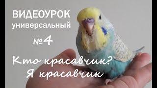 """🎧 Учим попугая говорить. Урок 4: """"Кто красавчик? Я красавчик!"""""""