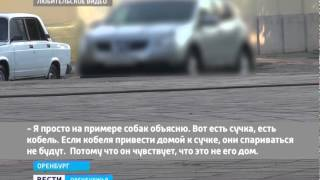 """ГТРК """"Оренбург"""" - Проститутки в Интернете"""