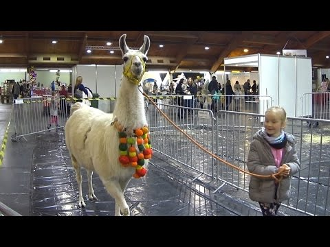 ZOO EXPO Riga 2015 Часть 2