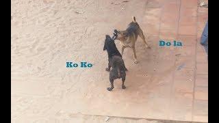 Best Fighting Dogs