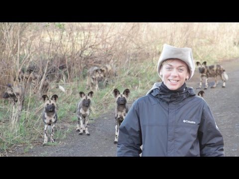 Protecting Endangered Wild Dogs in South Africa with WildlifeACT