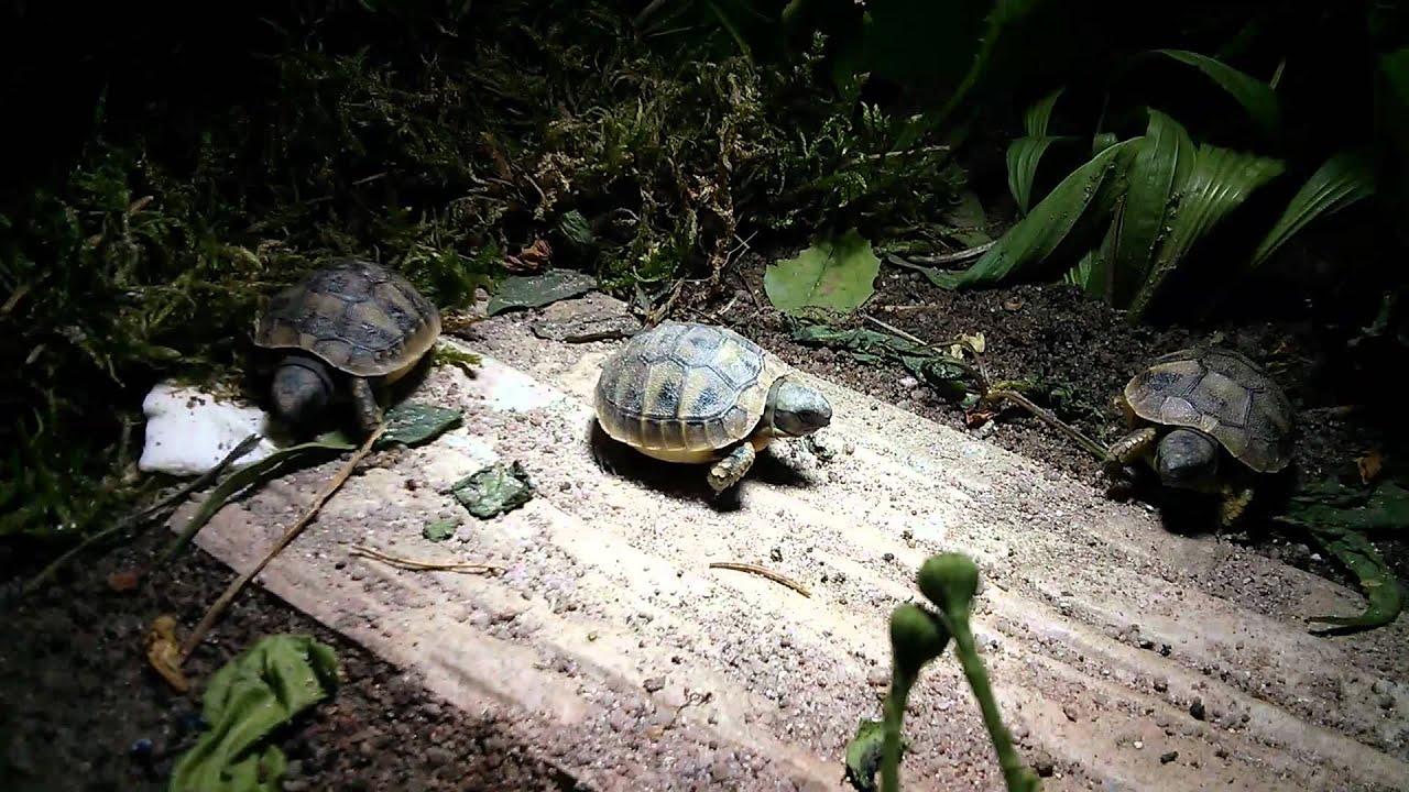 Mini Kühlschrank Für Schildkröten : Mini kühlschrank für schildkröte nachgefragt beim tierarzt