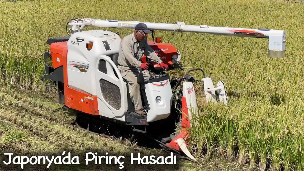 Japon Amca Pirinç Hasadı Yapıyor | Japonic