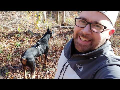 Doberman Pinscher Vlog - Will Dog Save Me if I Fall