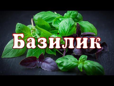 Специи. БАЗИЛИК или РЕГАН. ARGoStav Kitchen /ENG SUB