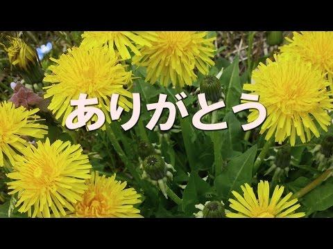 ありがとう (石坂智子) - cover -