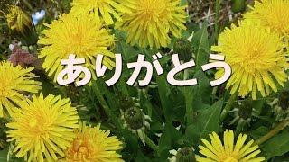 1980年 石坂智子さんのデビュー曲。テレビドラマ『ただいま放課後』...