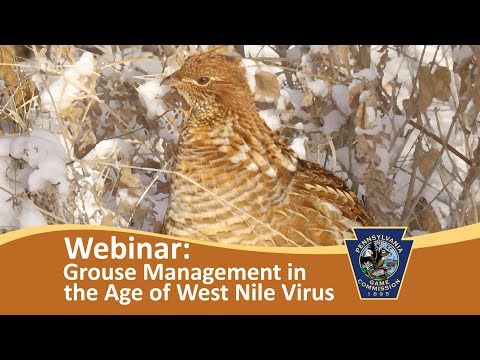 Grouse Management in the Age of West Nile Virus