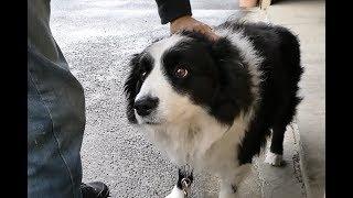 年末に帰省していた息子が行くときのワンコとのお別れシーンです。 愛犬...