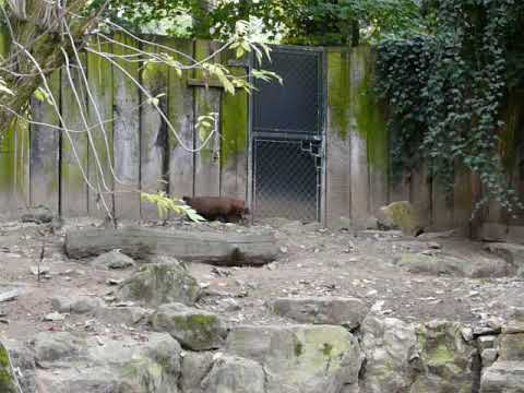A family of Bush dogs