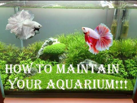 HOW TO MAINTAIN YOUR AQUARIUM