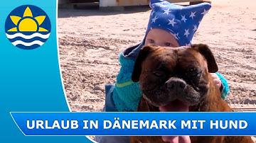 Erholsamer Urlaub mit Hund in einem Ferienhaus mit Hund in Dänemark