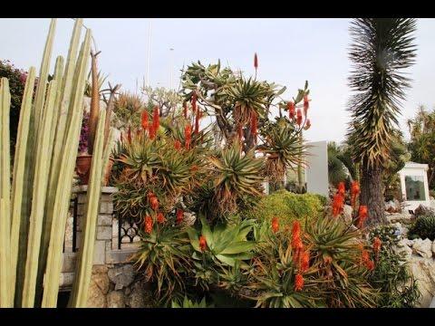 Monaco le Jardin exotique
