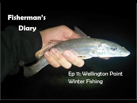 Ep 11: Fishing At Wellington Point ~ Fisherman's Diary