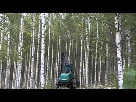 Timberjack harvester working. Birch trees first forest thinning (full hd)