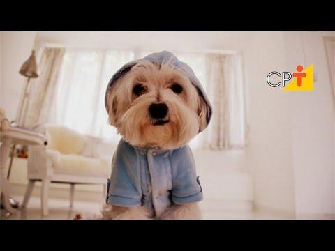 Clique e veja o vídeo Curso CPT Como Cuidar e Educar o Seu Cão