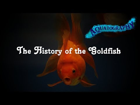 The History Of The Goldfish; Thoughts From The Deep Episode 4