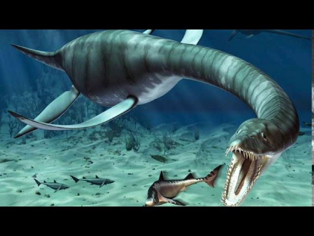 VIDEO: Champ, lake monster of lake champlain