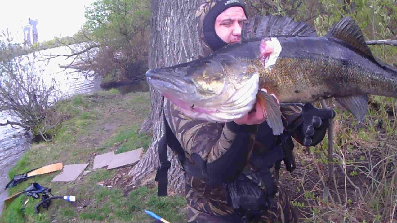 Подводная охота на Москва реке! Огромный клыкастый Судак! Макс Наумкин!