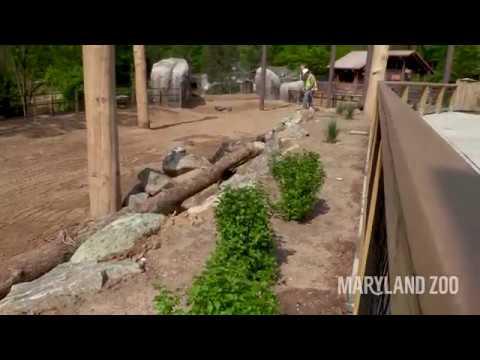 African Journey Construction Update: 5/2/19