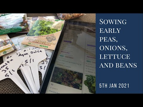 Sowing early peas, lettuce. onions and beans | year round self-sufficiency