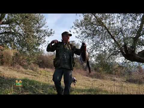 Caccia al fagiano AFV Fontignano