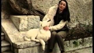 Cane da pastore maremmano abruzzese   мареммо абруцкая овчарка