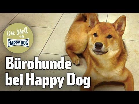 Bürohunde: Unsere Happy Dogs bei der Arbeit!