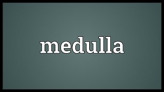 Medulla Meaning