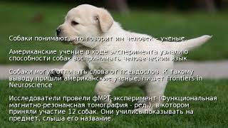 Собаки понимают, что говорит им человек – ученые