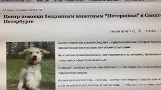 Центр помощи бездомным животным «Потеряшка» в Санкт-Петербурге