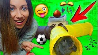 Кролик Лизун в тоннеле 🤗 ПЕРВАЯ РЕАКЦИЯ на 🎁 покупки из зоомагазина | Elli Di Pets