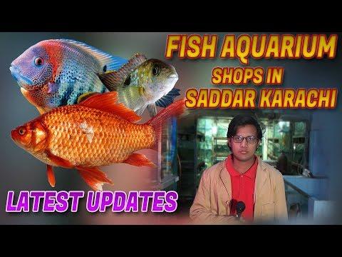 aquarium-fish-shop-in-saddar-karachi-latest-update-(-jamshed-asmi-informative-channel-)