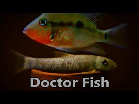 Doctor Fish Garra Rufa Care & Tank Set Up Guide