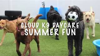 Cloud K9 Summer Fun!