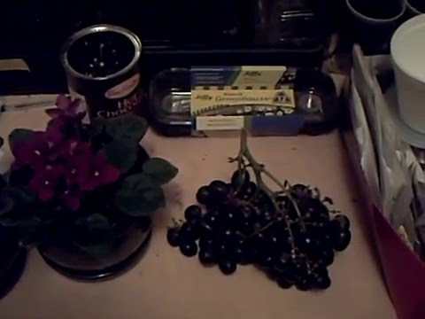 Growing Grapes From Grocery Store Stems