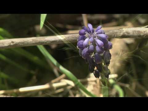 Naturalist Notebook-Texas Wildflowers Part 1