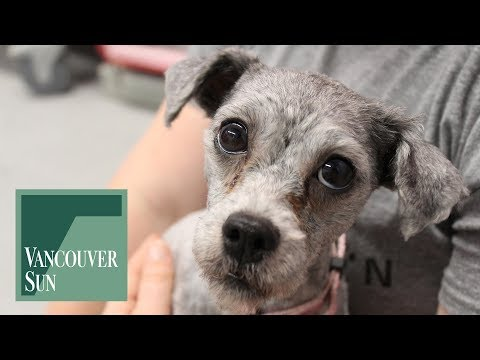 """SPCA seizes 15 neglected dogs from Chilliwack """"puppy mill"""